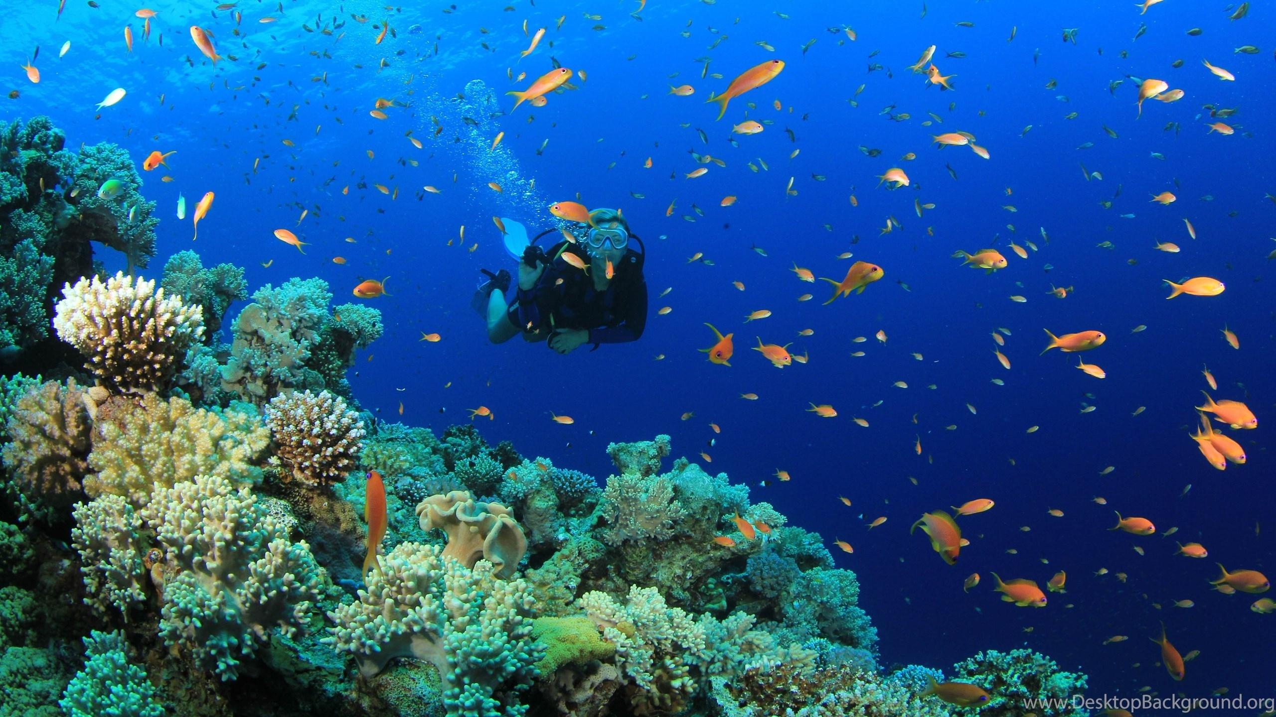 Title Scuba Diving Diver Ocean Sea Underwater Fish Wallpapers 5184x2904 Dimension 2560 X 1440 File Type JPG JPEG