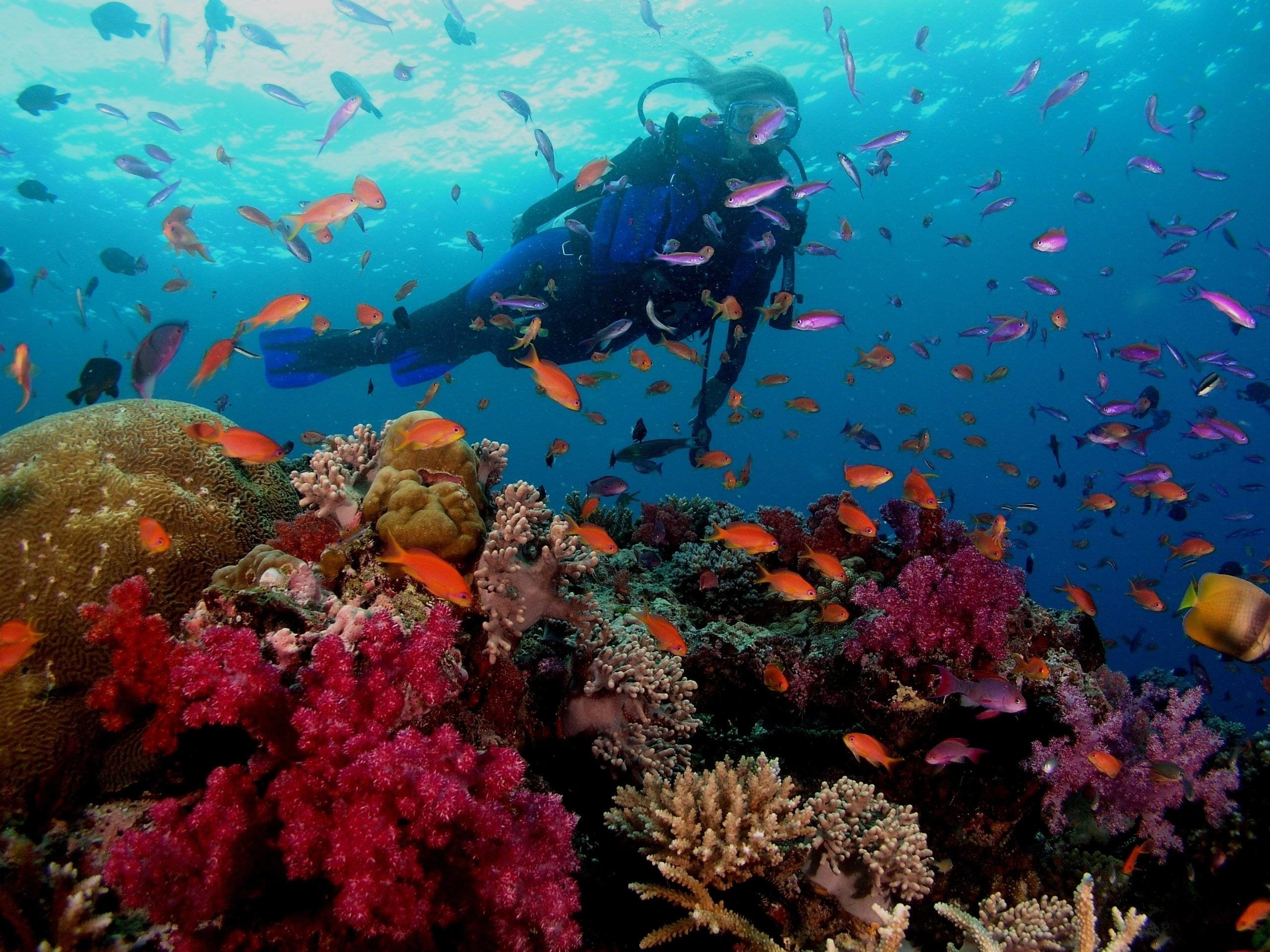 scuba diving wallpaper high resolution (51+ images)