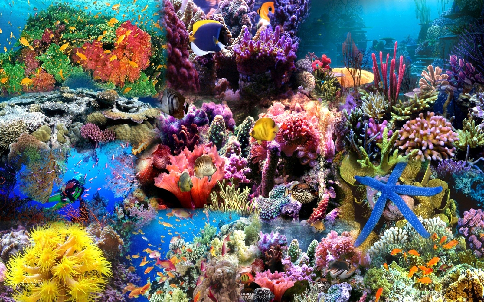 sea life backgrounds group (58+)