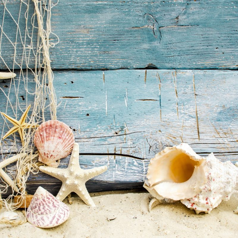 10 New Sea Shell Wall Paper FULL HD 1080p For PC Background 2018 free download sea shells wallpaper 52 images 800x800