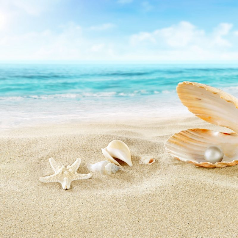 10 New Sea Shell Wall Paper FULL HD 1080p For PC Background 2018 free download seashell and pearl beach 4k wallpaper free 4k wallpaper 800x800
