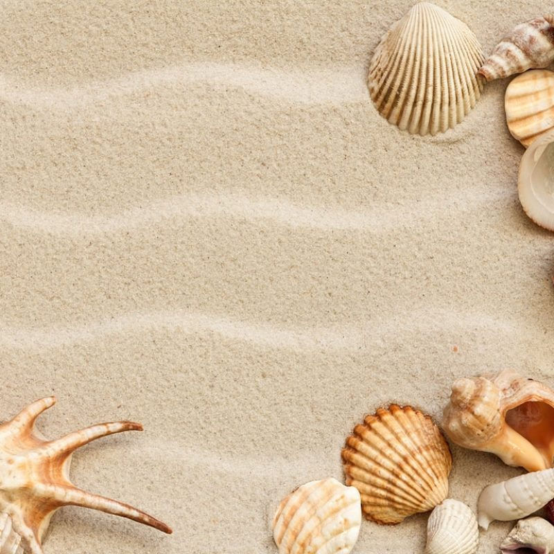 10 New Sea Shell Wall Paper FULL HD 1080p For PC Background 2018 free download seashell wallpaper wallpapers browse 800x800