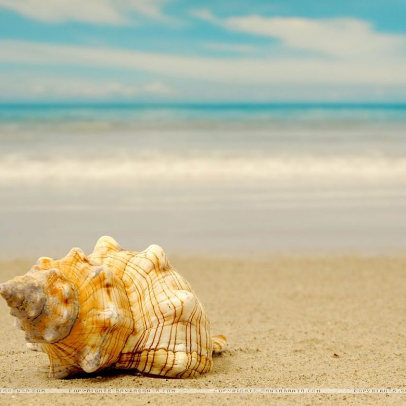 10 New Sea Shell Wall Paper FULL HD 1080p For PC Background 2018 free download seashells hd wallpaper beyond the sea pinterest 800x800
