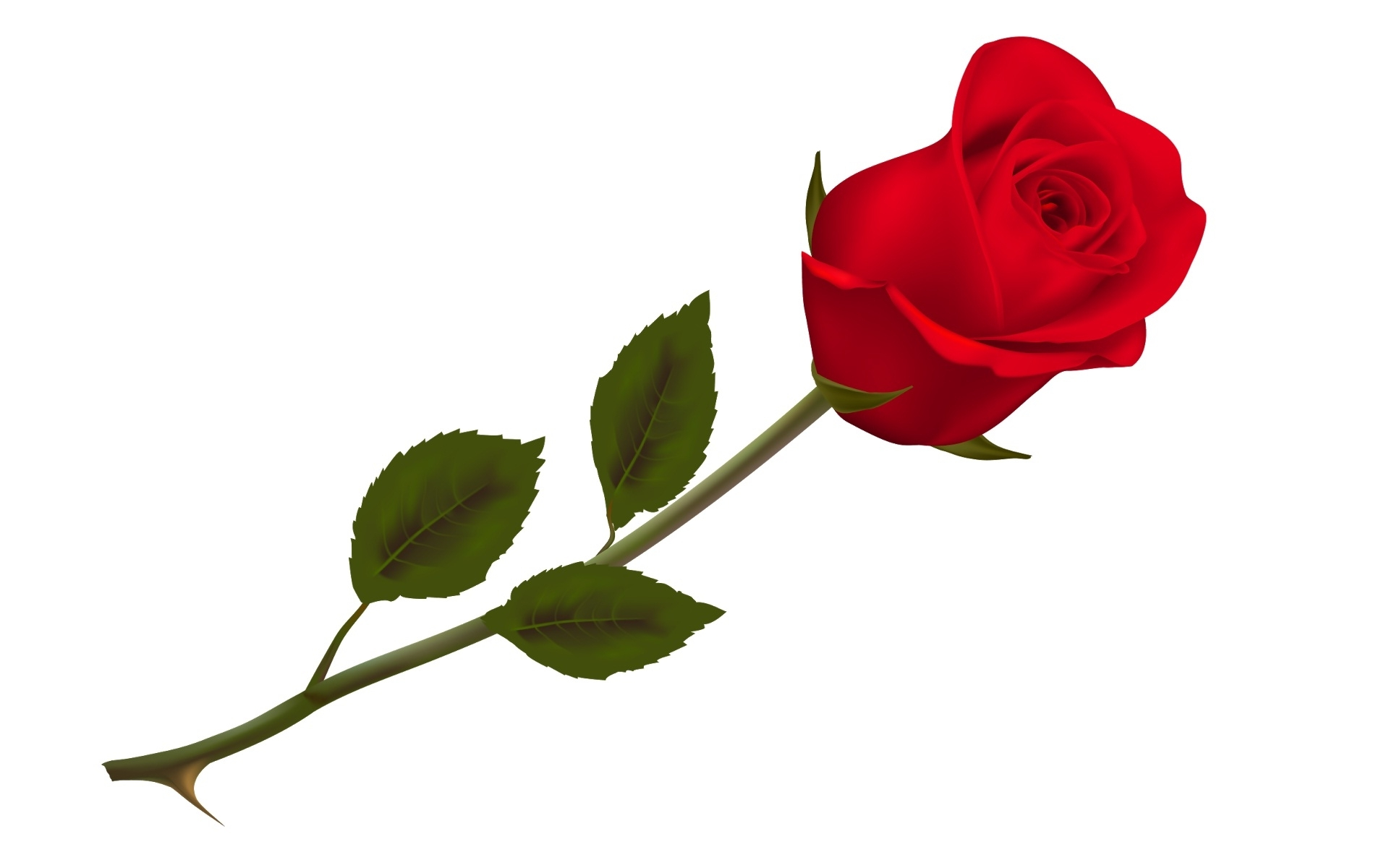 10 top single red rose picture full hd 1080p for pc background