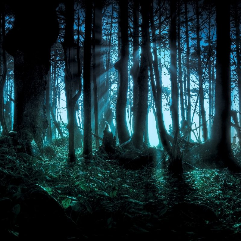 10 Top Hd Wallpapers Dark Forest FULL HD 1080p For PC Background 2020 free download sinister forest full hd fond decran and arriere plan 1920x1200 800x800