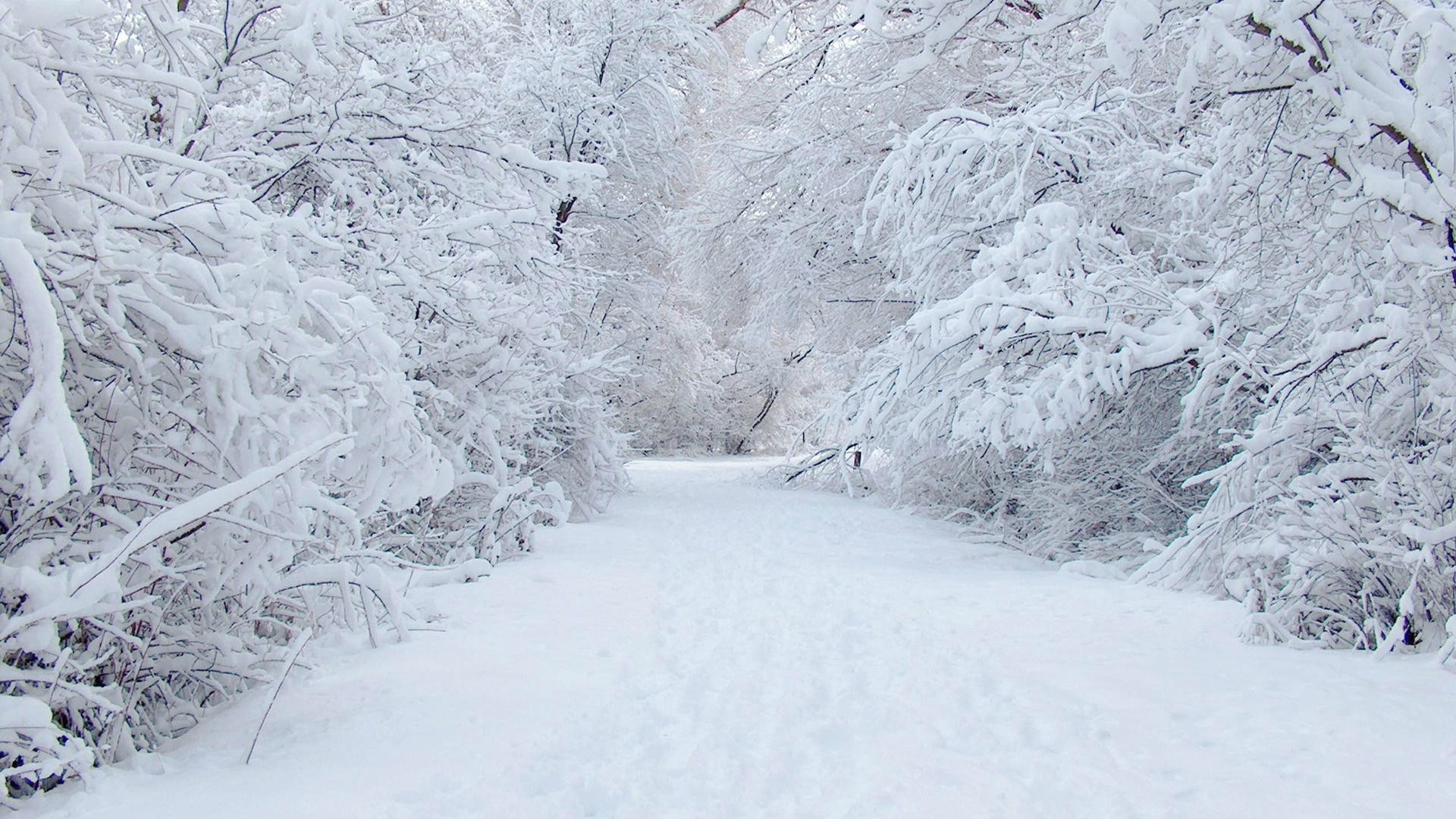 10 New Snow Wallpaper Hd Widescreen FULL HD 1080p For PC ...