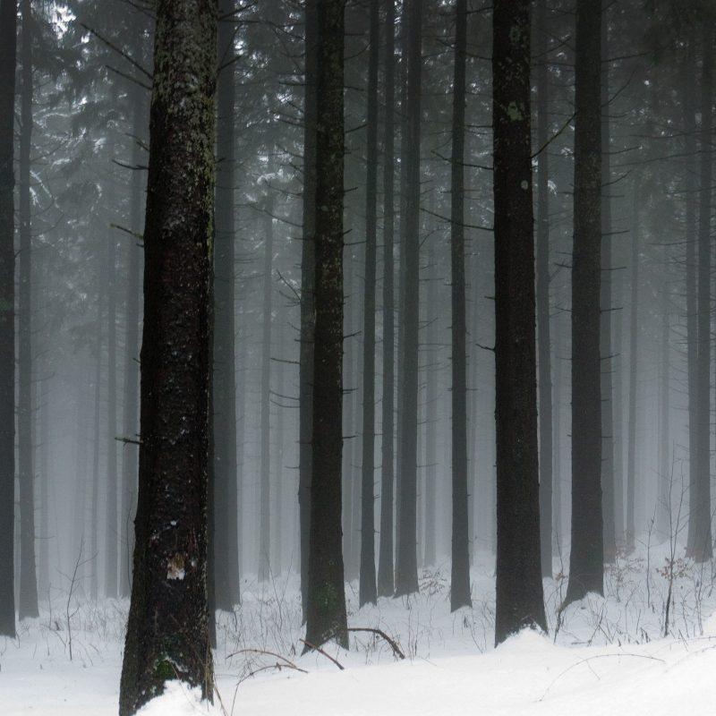 10 Top Dark Snowy Forest Background FULL HD 1920×1080 For PC Desktop 2020 free download snowy dark forest wallpaper c2b7e291a0 1 800x800