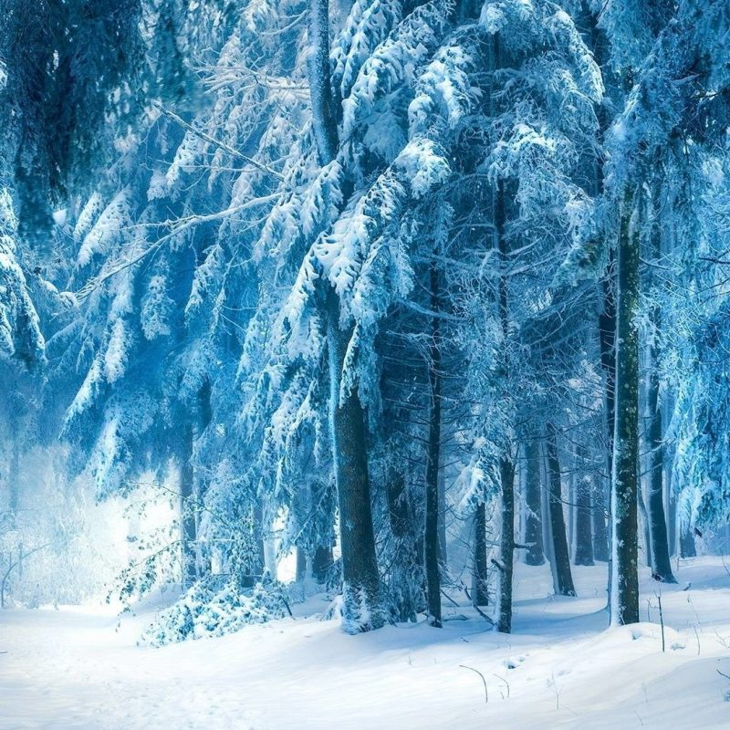 10 Top Snowy Dark Forest Wallpaper FULL HD 1920×1080 For PC Background 2018 free download snowy dark forest wallpaper c2b7e291a0 800x800