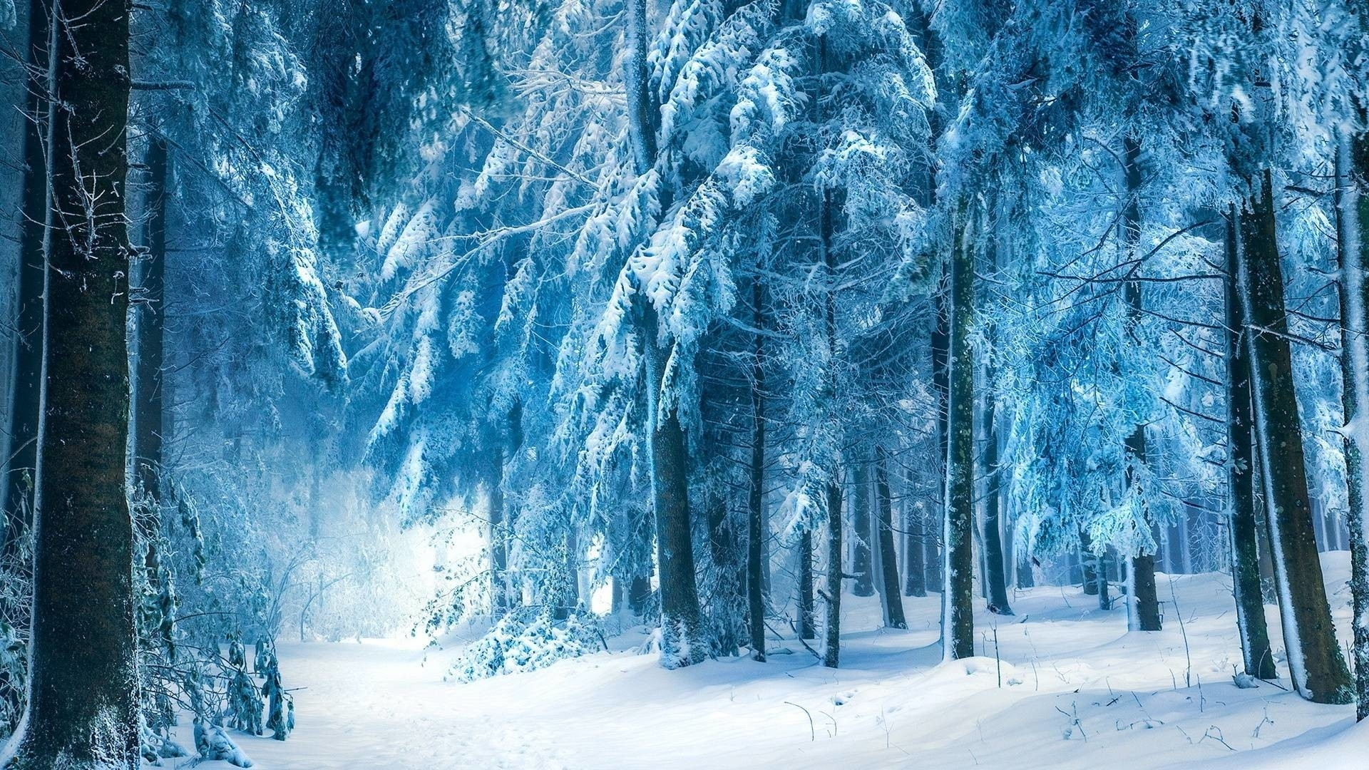 snowy dark forest wallpaper ·①