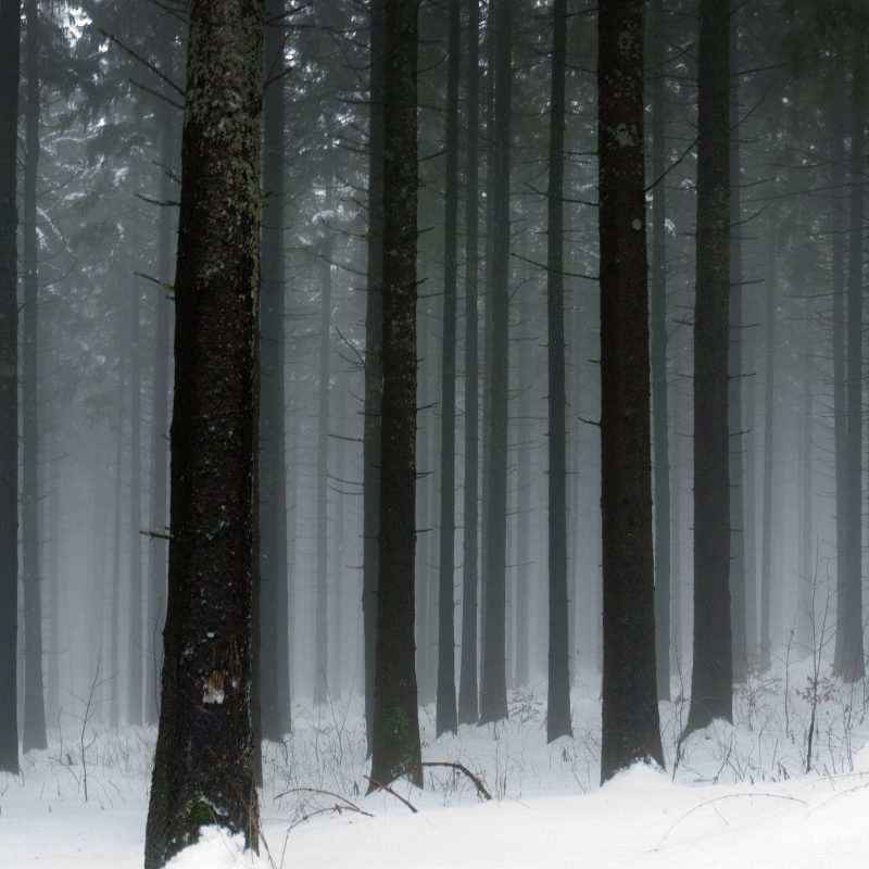 10 Top Snowy Dark Forest Wallpaper FULL HD 1920×1080 For PC Background 2018 free download snowy forest wallpaper 2560x1600 1344 wallpaperup 800x800