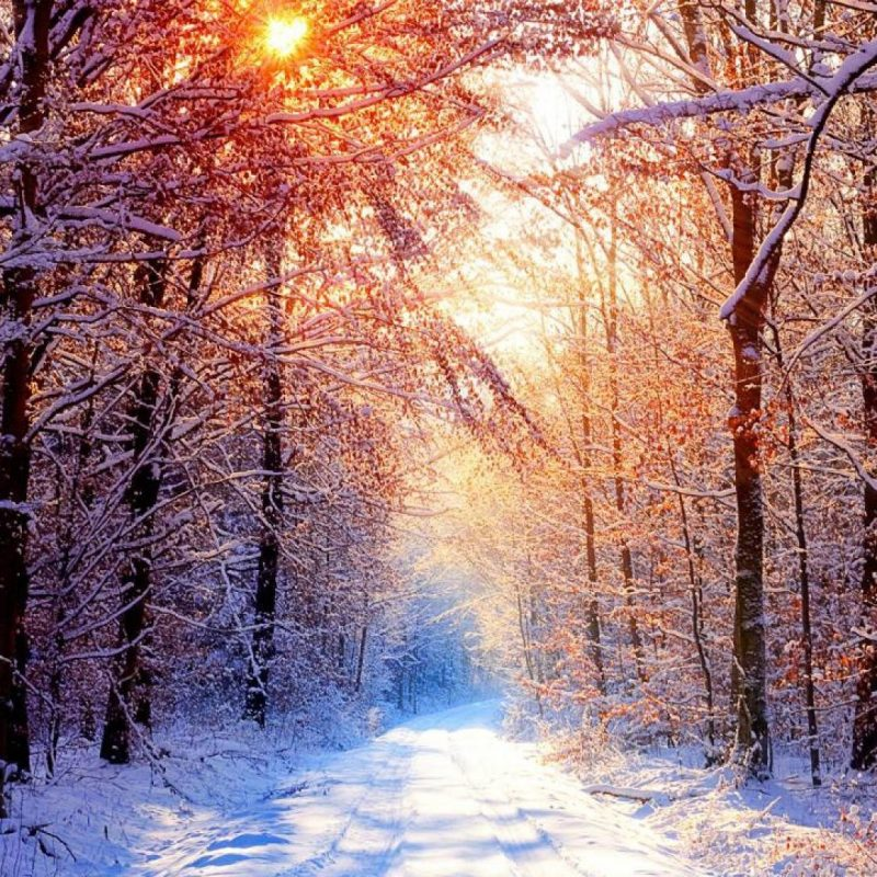 10 Latest Winter Forest Hd Wallpaper FULL HD 1080p For PC Desktop 2018 free download snowy forest wallpapers wallpaper cave 1 800x800