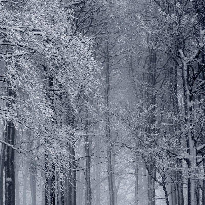 10 Latest Winter Forest Hd Wallpaper FULL HD 1080p For PC Desktop 2018 free download snowy forest winter e29da4 4k hd desktop wallpaper for 4k ultra hd tv 1 800x800