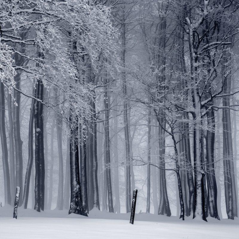 10 Best Winter Forest Wallpaper Hd FULL HD 1080p For PC Background 2018 free download snowy forest winter e29da4 4k hd desktop wallpaper for 4k ultra hd tv 800x800