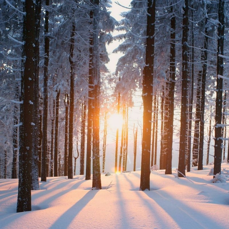 10 Best Winter Forest Wallpaper Hd FULL HD 1080p For PC Background 2018 free download snowy winter forest wallpaper wallpaper studio 10 tens of 800x800