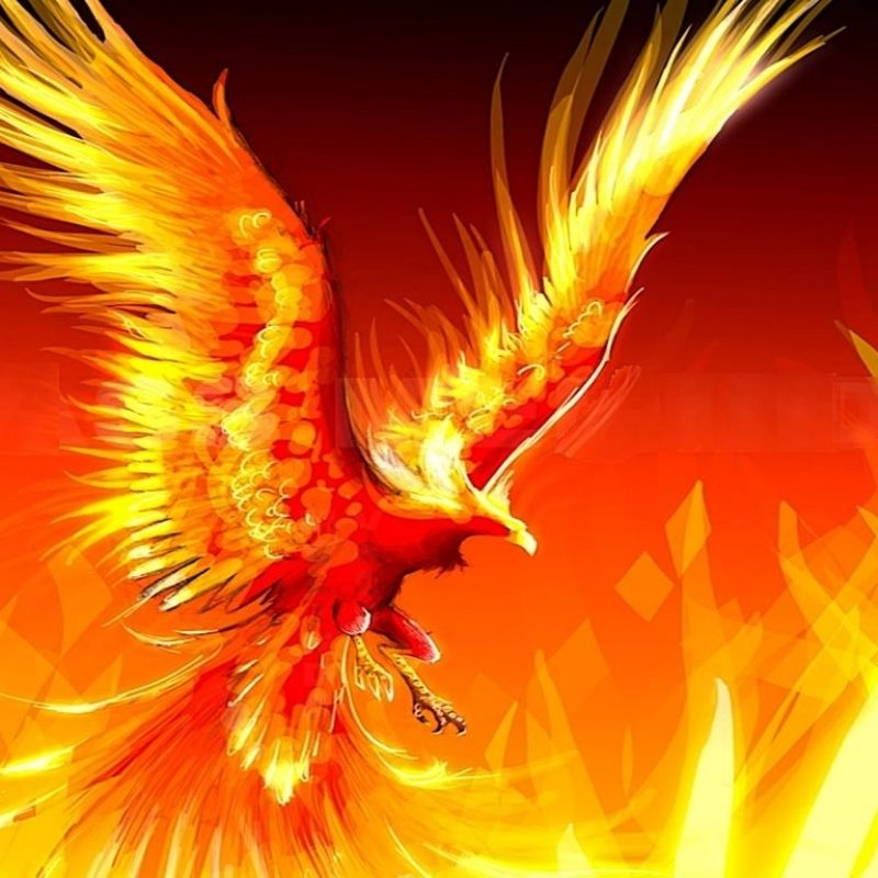 10 Top Cool Phoenix Bird Wallpaper FULL HD 1080p For PC Desktop 2020 free download some mythological beings the fire phoenix picture 800x800
