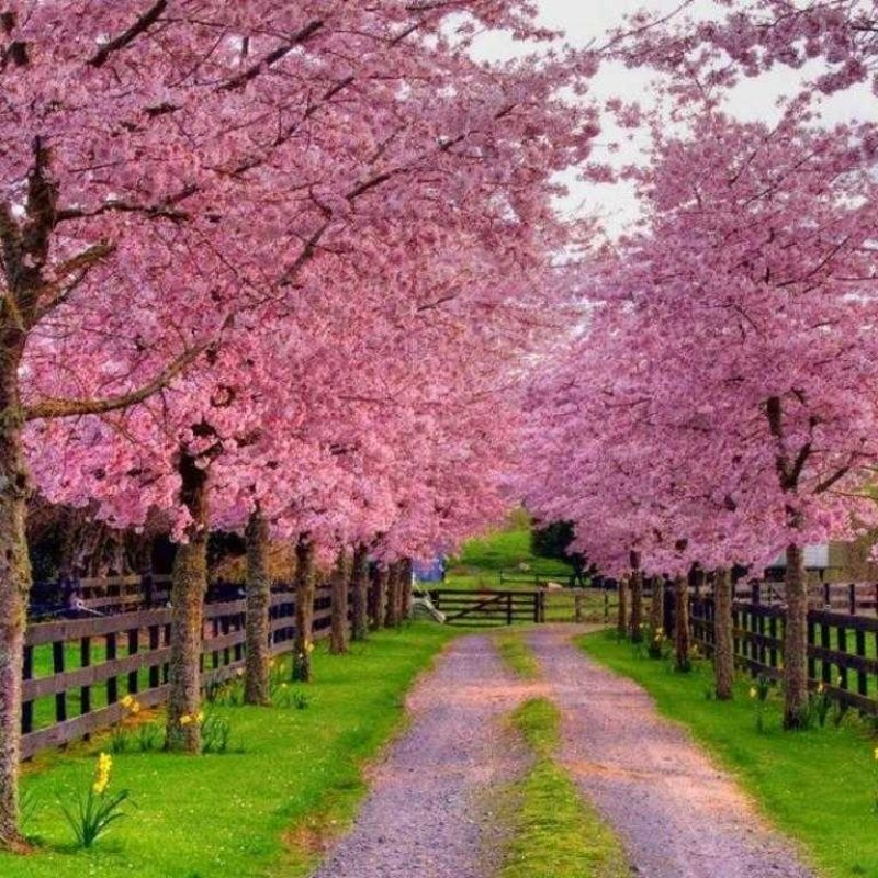 10 Top Free Spring Wallpaper Backgrounds FULL HD 1920×1080 For PC Background 2018 free download spring and screensavers wallpaper backgrounds of androids hd pics 800x800