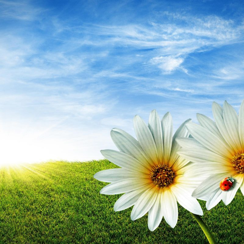 10 Best Spring Background Images Free FULL HD 1920×1080 For PC Desktop 2018 free download spring background 19093 2560x1600 px hdwallsource 1 800x800