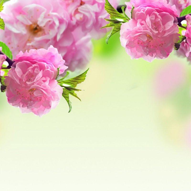 10 Best Spring Wallpaper For Computers FULL HD 1920×1080 For PC Desktop 2020 free download spring background free download pixelstalk 1 800x800