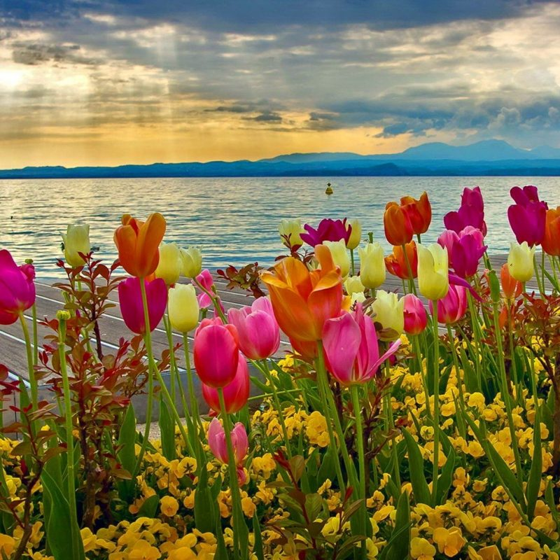 10 Best Spring Wallpaper For Computers FULL HD 1920×1080 For PC Desktop 2020 free download spring backgrounds for computer 52 images 800x800