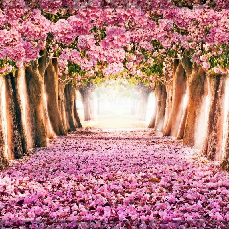 10 Best Spring Wallpaper For Computers FULL HD 1920×1080 For PC Desktop 2018 free download spring computer backgrounds c2b7e291a0 1 800x800
