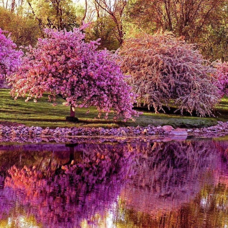 10 Most Popular Spring Desktop Wallpapers FULL HD 1080p For PC Background 2018 free download spring desktop wallpaper screensaver 56 images 800x800