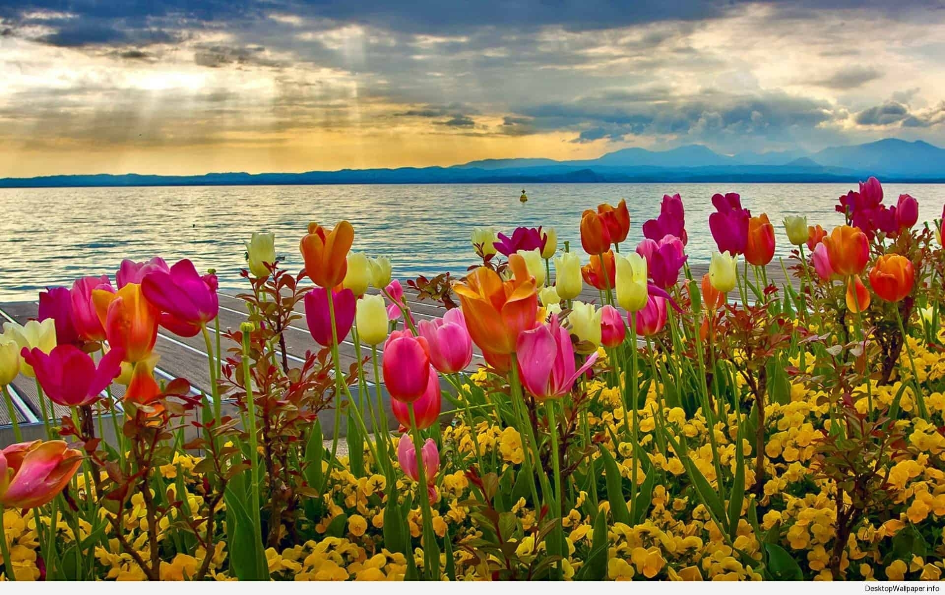 spring desktop wallpapers backgrounds | desktop wallpapers