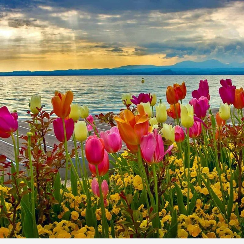 10 Best Spring Pictures For Desktop FULL HD 1920×1080 For PC Desktop 2018 free download spring desktop wallpapers backgrounds desktop wallpapers 2 800x800