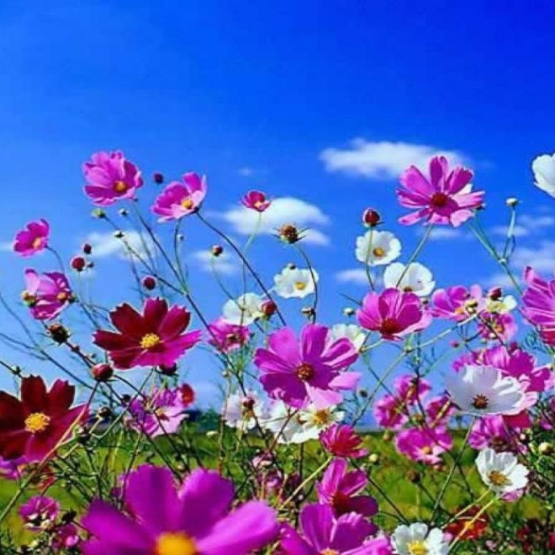 10 Most Popular Spring Desktop Wallpapers FULL HD 1080p For PC Background 2018 free download spring desktop wallpapers widescreen group 74 800x800