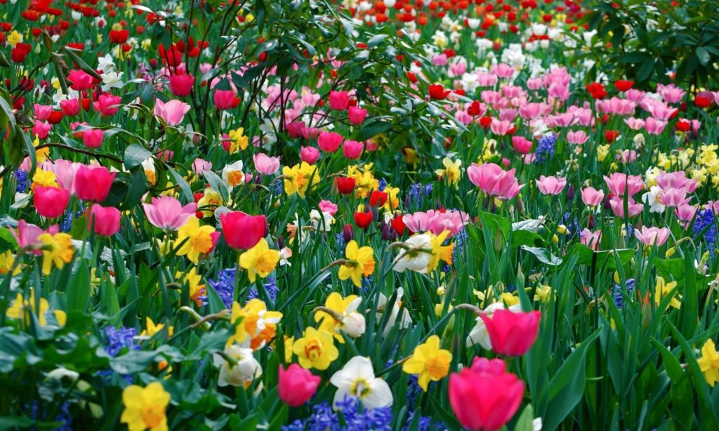 10 Most Popular Spring Flower Background Images FULL HD 1920×1080 For PC Background 2021 free download spring flower wallpaper backgrounds wallpaper cave 2 1024x614