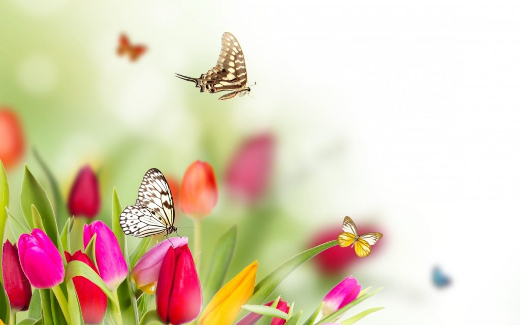 10 Most Popular Spring Flower Background Images FULL HD 1920×1080 For PC Background 2018 free download spring flowers and butterflies background hd new media file 1024x640