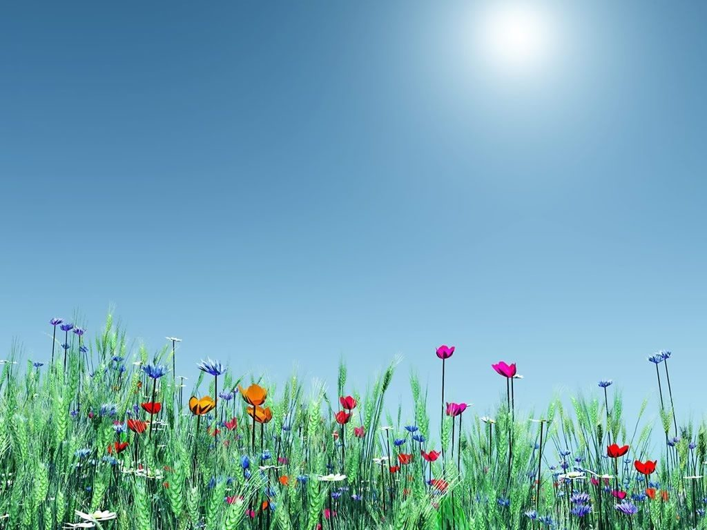 10 Most Popular Spring Flower Background Images FULL HD 1920×1080 For PC Background 2018 free download spring flowers background email this blogthis share to twitter 1024x768