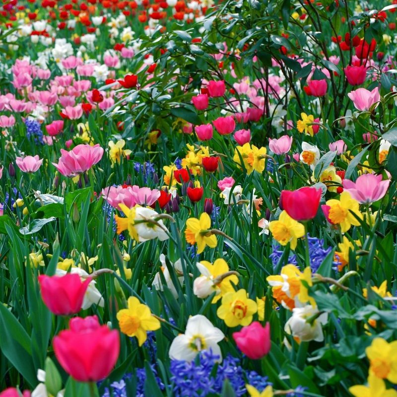 10 Best Pictures Of Spring Flowers For Wallpaper FULL HD 1080p For PC Background 2018 free download spring flowers background spring flowers wallpaper hd desktop 800x800