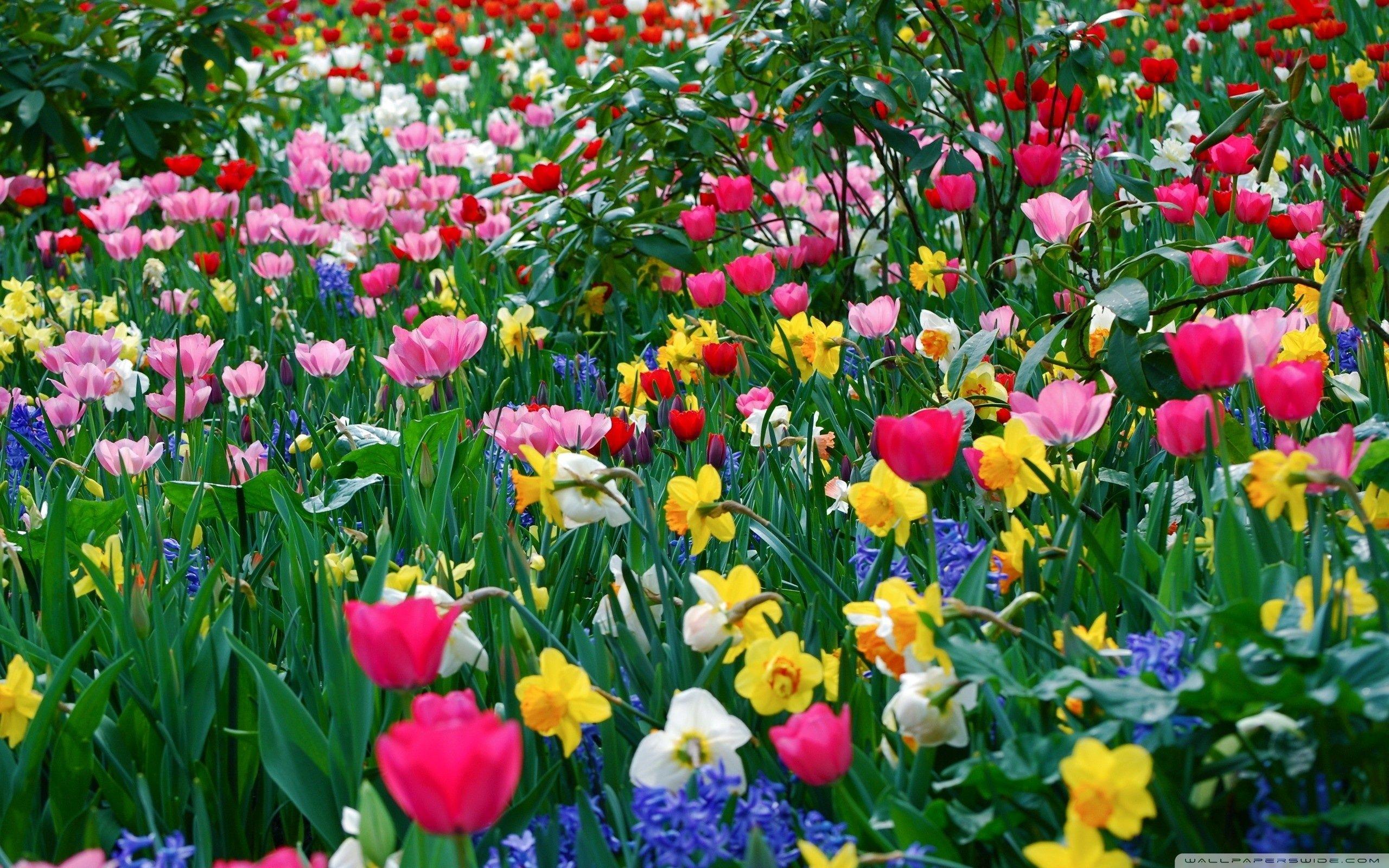 spring flowers background | spring flowers wallpaper hd desktop