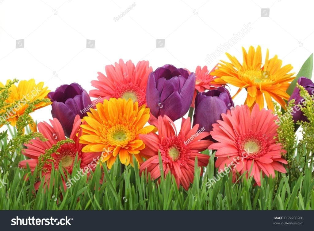 10 Most Popular Spring Flower Background Images FULL HD 1920×1080 For PC Background 2018 free download spring flowers background stock photo 72200200 shutterstock 1024x752