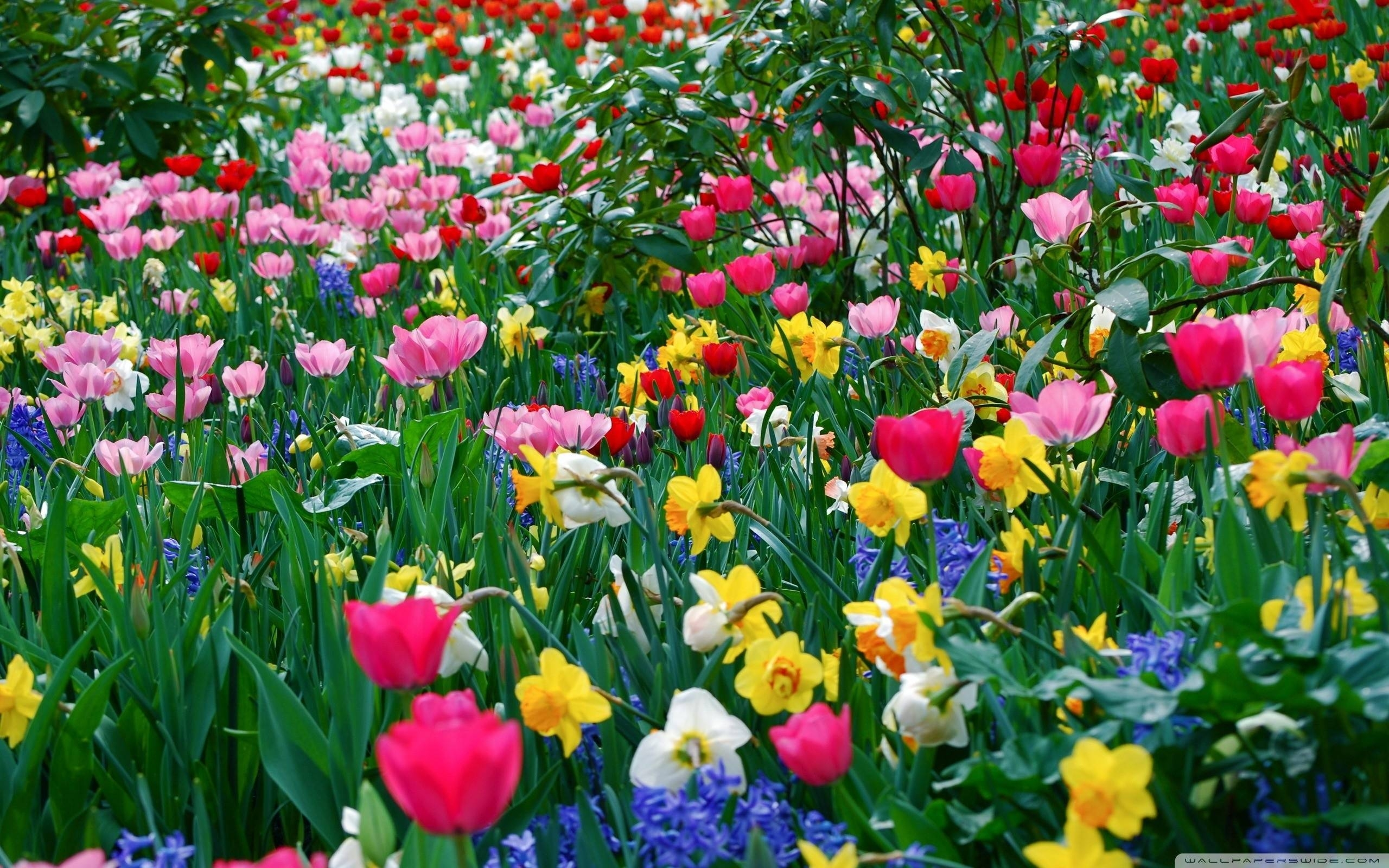 spring flowers backgrounds desktop - wallpaper cave