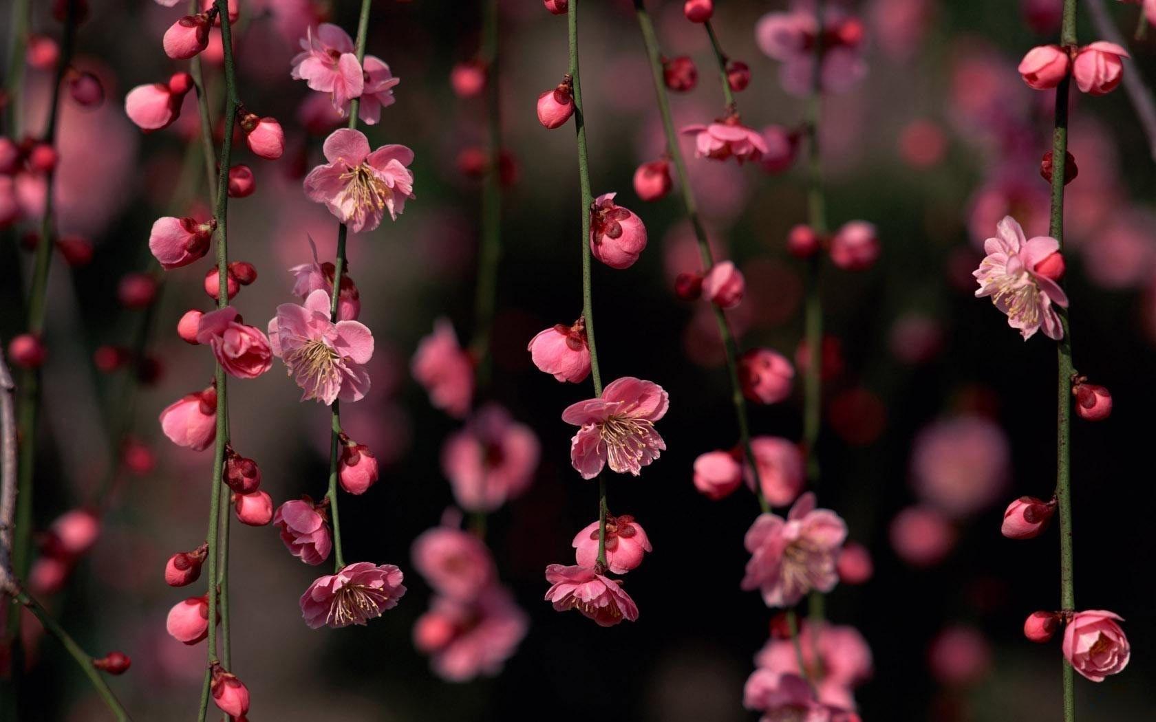 spring flowers wallpaper desktop background   natures wallpapers