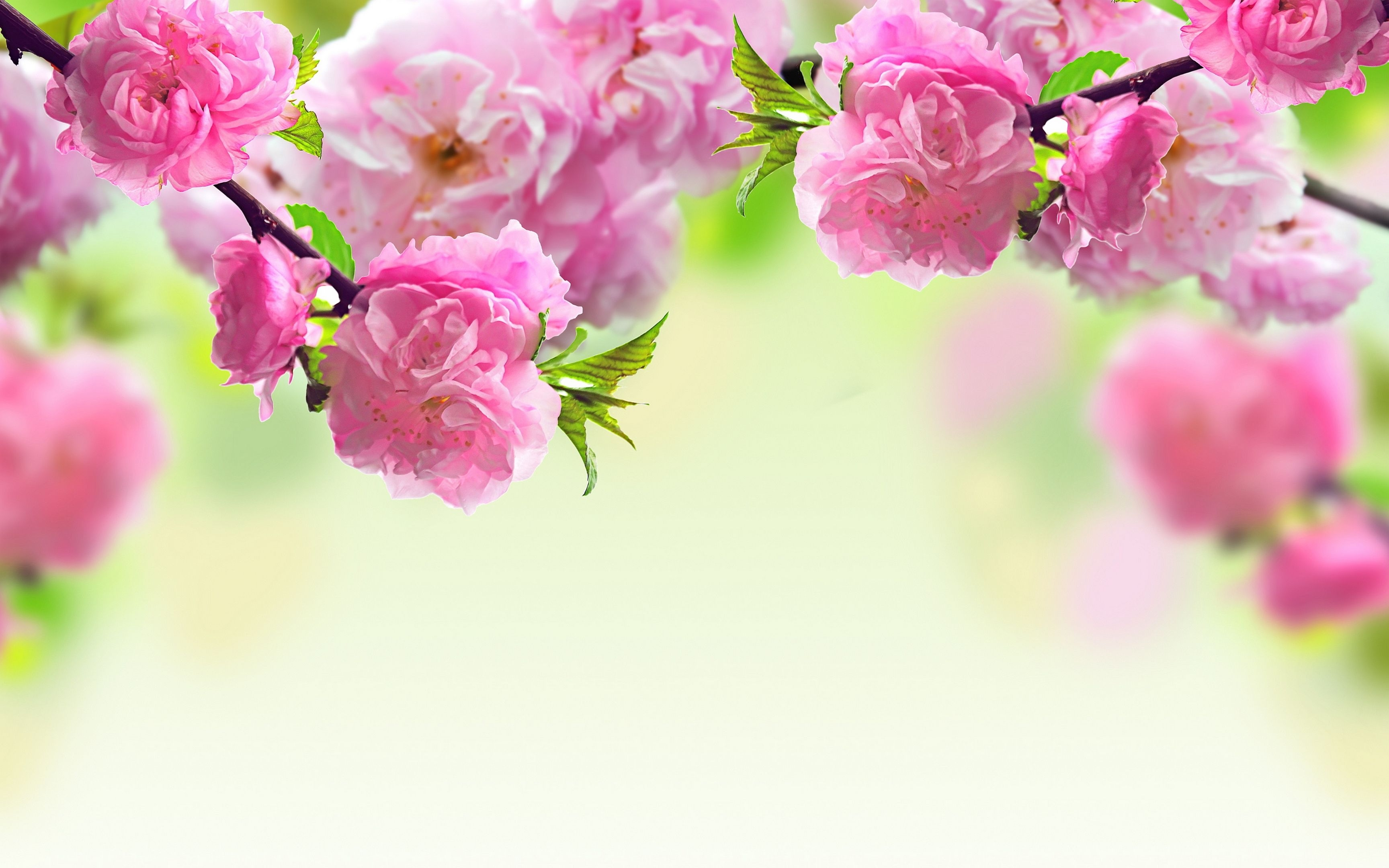 spring flowers wallpapers - http://wallpaperzoo/spring-flowers