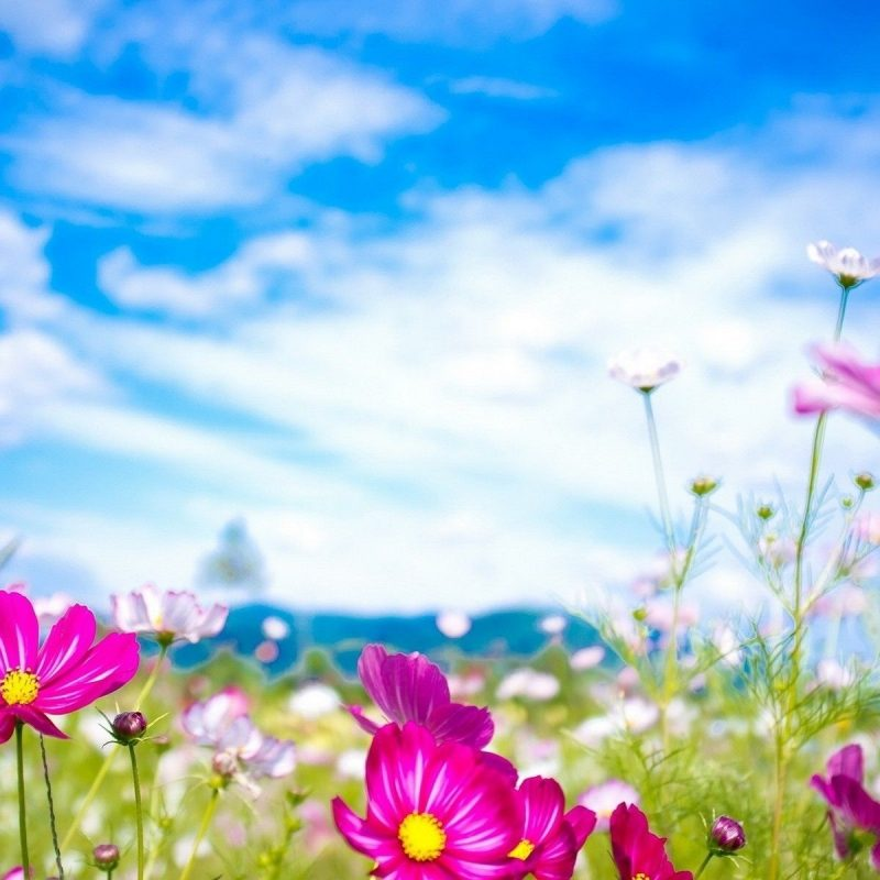 10 Top Free Spring Wallpaper Backgrounds FULL HD 1920×1080 For PC Background 2018 free download spring flowers wallpapers natures wallpapers pinterest spring 800x800