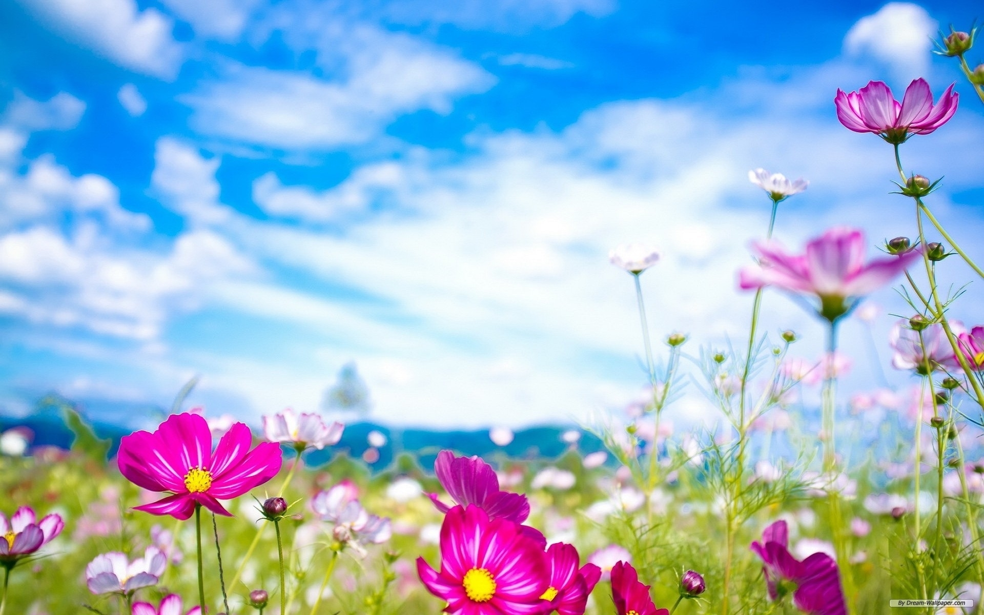 spring flowers wallpapers   natures wallpapers   pinterest