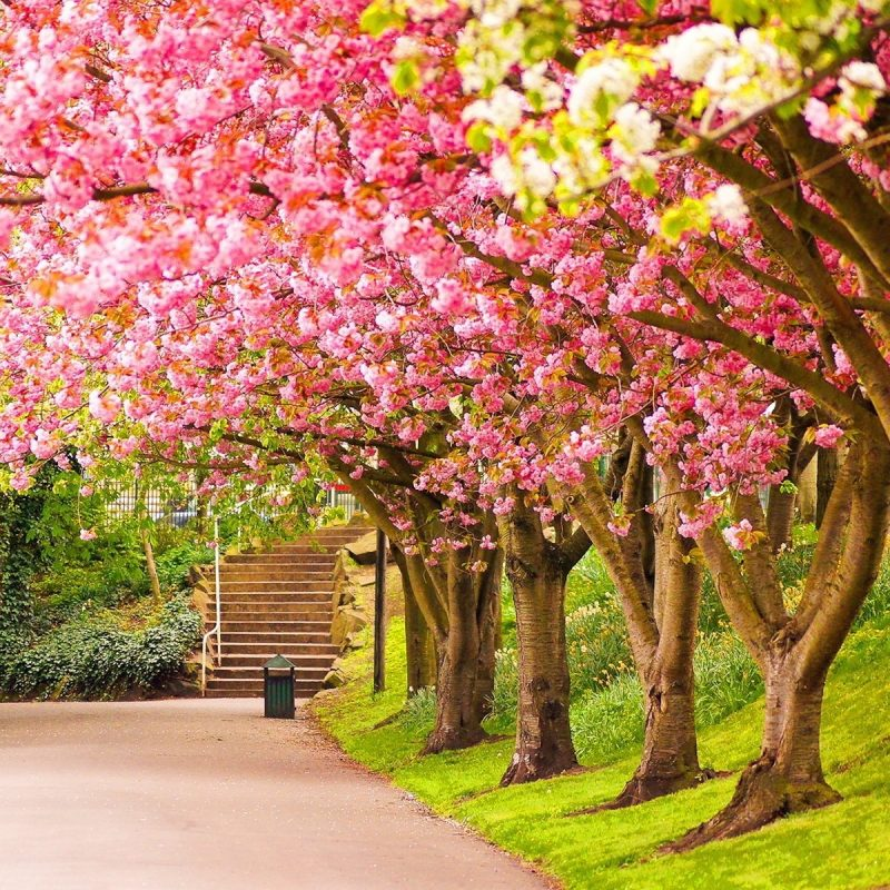 10 New Spring Scenery Wallpaper Widescreen FULL HD 1920×1080 For PC Desktop 2020 free download spring garden park bench hd wallpaper of beautiful nature 800x800