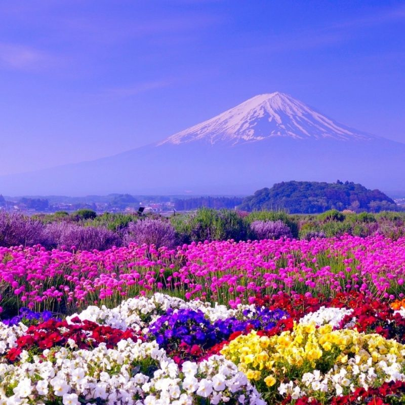 10 Top Free Spring Wallpaper Backgrounds FULL HD 1920×1080 For PC Background 2018 free download spring in japan wallpapers hd free download pixelstalk 1 800x800