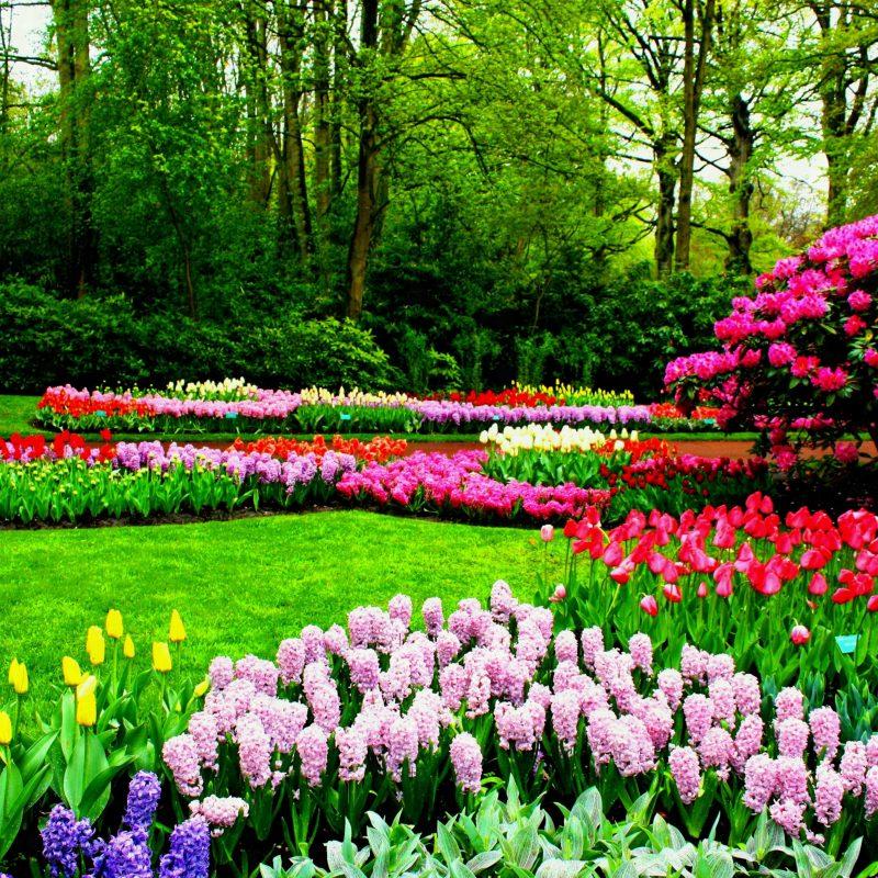 10 Best Spring Pictures For Desktop FULL HD 1920×1080 For PC Desktop 2018 free download spring nature park flowers garden sakura flower desktop background 800x800