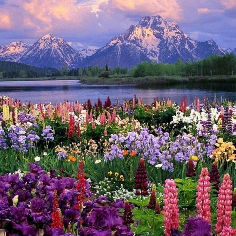 10 Top Spring Nature Wallpaper Desktop FULL HD 1920×1080 For PC Background 2018 free download spring nature wallpaper for desktop 2018 cute screensavers 2 800x800