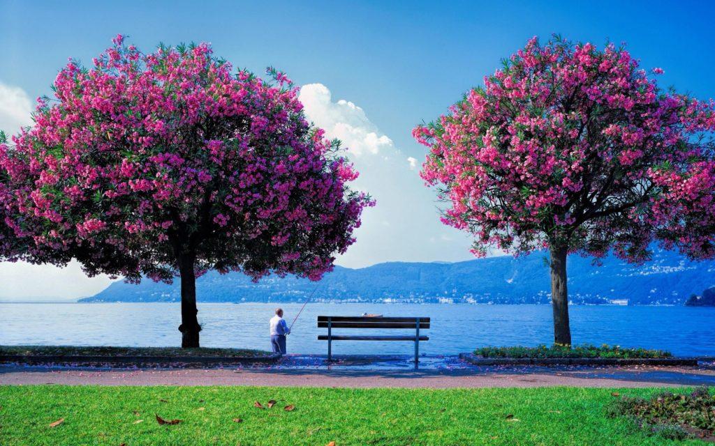 10 Most Popular Spring Nature Desktop Wallpaper FULL HD 1080p For PC Desktop 2018 free download spring nature wallpapers modafinilsale 1024x640
