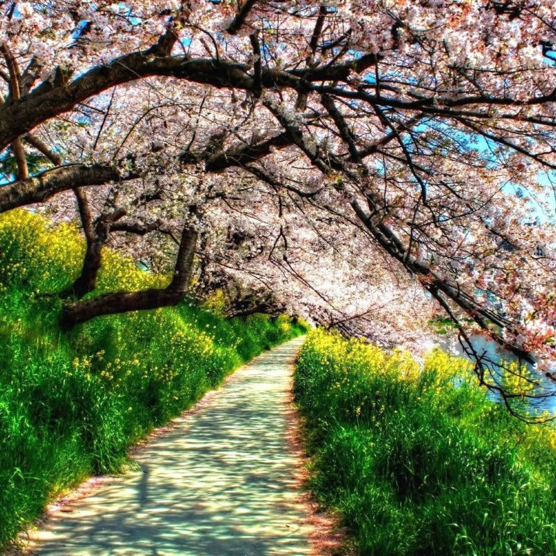 10 Top Spring Nature Wallpaper Desktop FULL HD 1920×1080 For PC Background 2018 free download spring nature wallpapers wallpaper cave images wallpapers 800x800