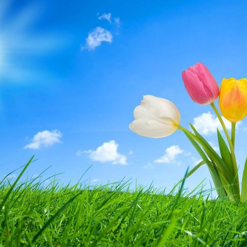 10 Top Free Spring Wallpaper Backgrounds FULL HD 1920×1080 For PC Background 2018 free download spring pictures for desktop best top desktop spring wallpapers hd 800x800