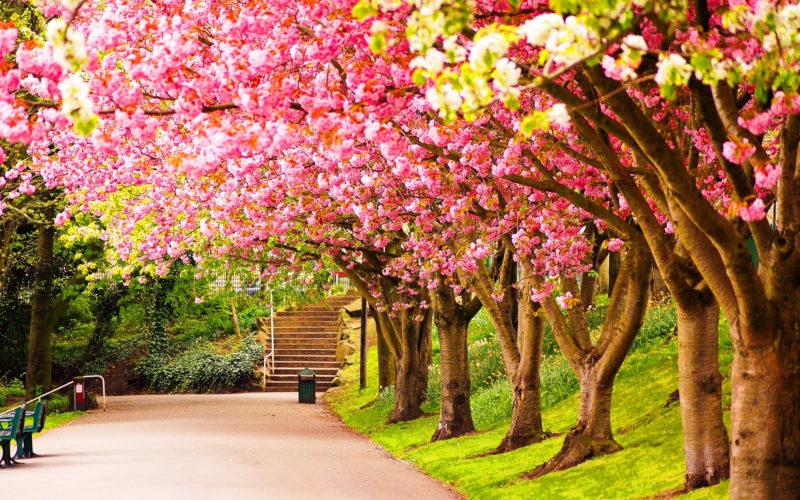 10 Latest Spring Desktop Wallpaper Hd FULL HD 1080p For PC Background 2020 free download spring season wallpaper sf wallpaper 800x500