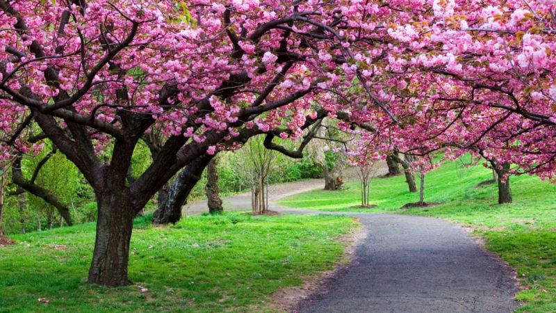 10 Latest Spring Desktop Wallpaper Hd FULL HD 1080p For PC Background 2020 free download spring tree hd desktop wallpaper 25924 baltana 800x450