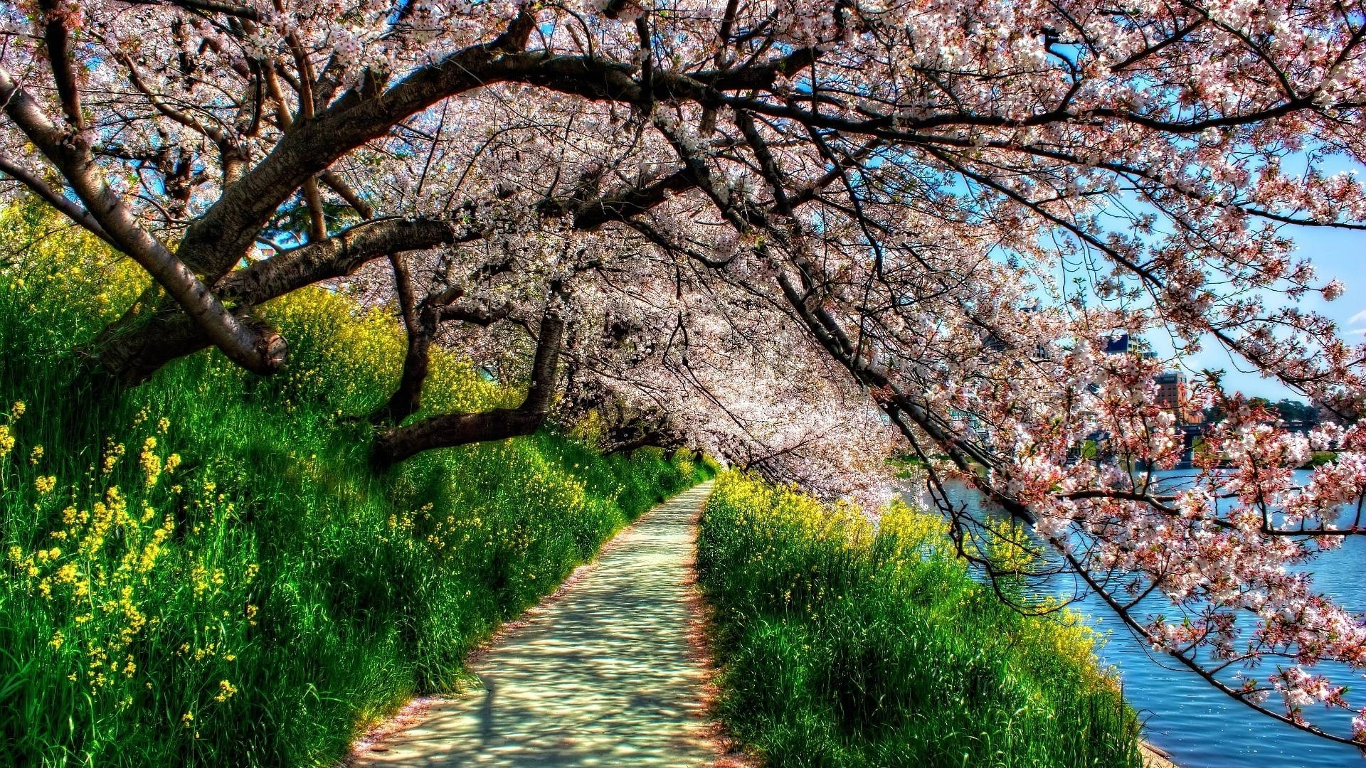 10 Top Spring Hd Wallpaper 1920X1080 FULL HD 1080p For PC Background