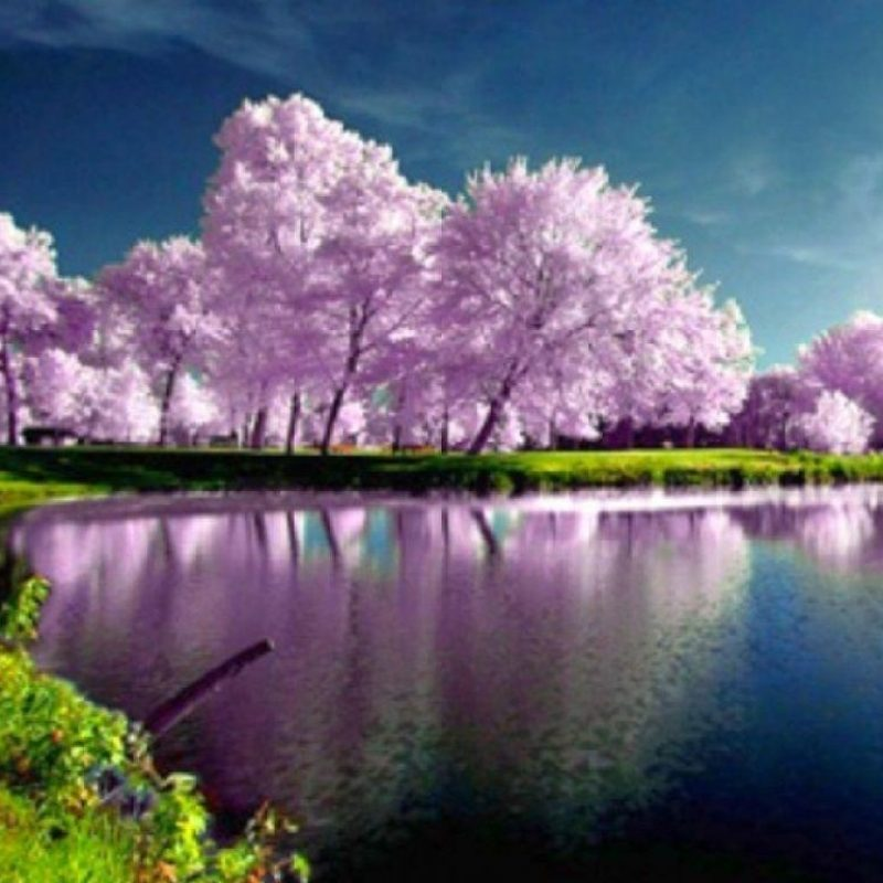 10 Best Spring Wallpaper For Computers FULL HD 1920×1080 For PC Desktop 2020 free download spring wallpapers computer wallpaper cave 800x800